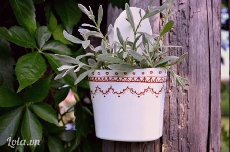 Trồng cây vào giỏ, treo trang trí lên cây, tường, vườn nhà bạn sẽ rất xinh