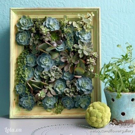 Trang treo tường kết hợp trồng hoa