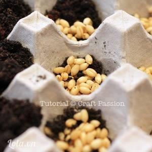 Đầu tiên bạn gieo hạt vào những vỉ đựng trứng, nhớ để ý đến độ ẩm của đất và tưới nước cho hạt đều đặn nhé.