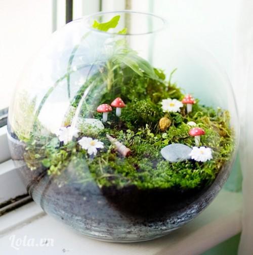 Hướng dẫn trồng Terrarium