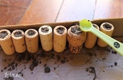 Bước 4:  - Lấp đất vào mỗi nắp chai.