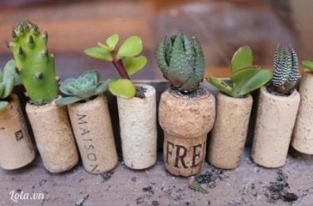 Bước 5:  - Cuối cùng, bạn trồng cây vào mỗi nắp chai rồi gắn lên bàn học hoặc tủ lạnh để trang trí nhé!