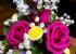 hoa hồng cho tình yêu