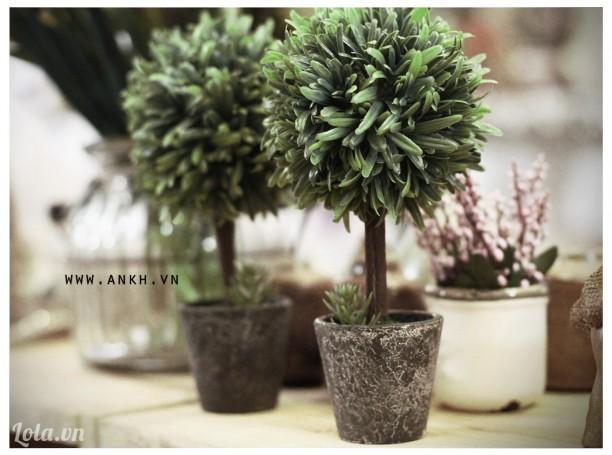 Chậu cây xanh trang trí