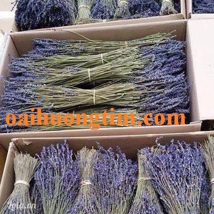 Bán sỉ hoa oải hương lavender khô nhập khẩu từ Pháp