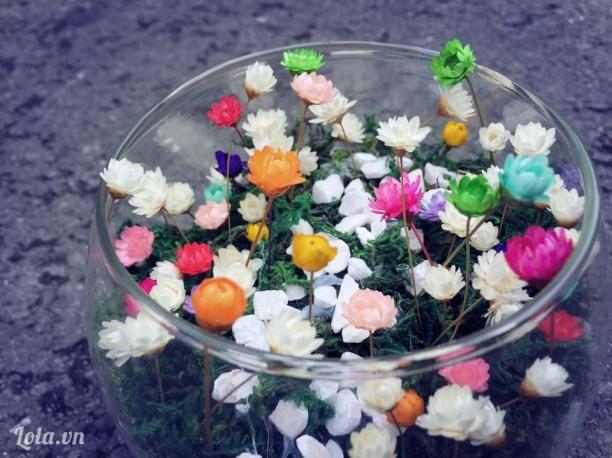 Lọ hoa snowy (hoa tuyết nhiệt đới)