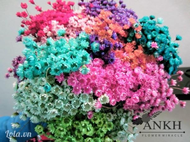 Hoa tuyết nhiệt đới (Snowy)