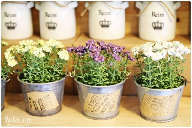 Chậu nhôm Handmade hoa liti