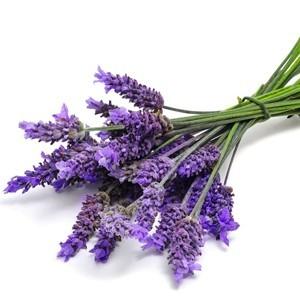 Hương Hoa oải hương (Lavender) 5ml