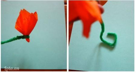 Dùng dây buộc xoắn chặc lại chừa phần lõi dưới nhỏ cho hoa như trong hình kế tiếp bạn giữ cho thân cây đứng vững bằng cách xoắn nhẹ phần dưới của dây buộc kiểu như bình hoa
