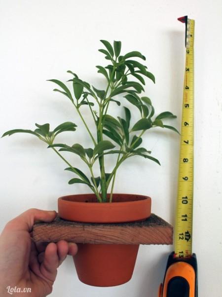 Cho chậu cây vào phía trong của của miếng ván và đó kích thước chiều cao của chậu cây