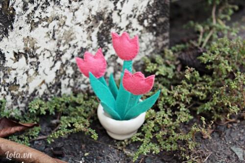 Chậu hoa Tulip mini