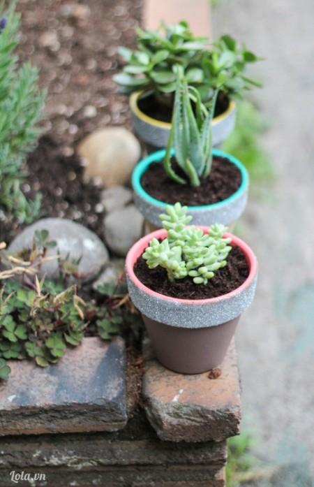 Cho đất và cây vào chậu. Giờ chậu cây của bạn đã xinh thế này nè. Rất đẹp đúng không ?