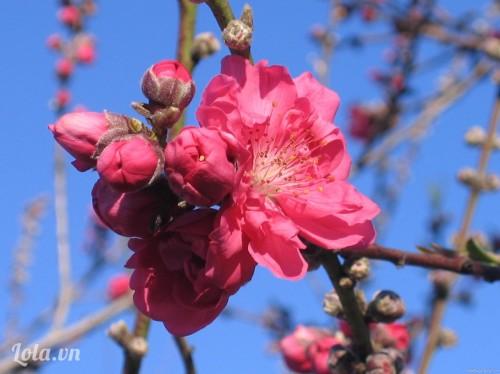 Hoa truyền thống ngày Tết