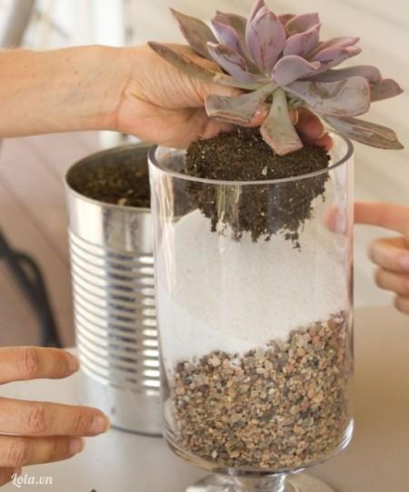 Cho cát về một bên ngược lại với đá sỏi, kế đó cho cây vào trồng